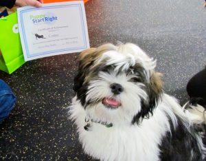 cooper-puppy-grad-pic